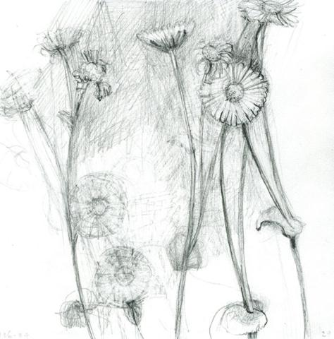 hartbladzonnebloemen